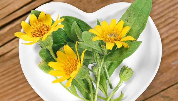 What is Arnica - Arnica Flower